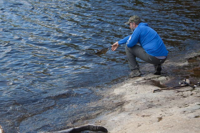 Lawrence bringing in his catch