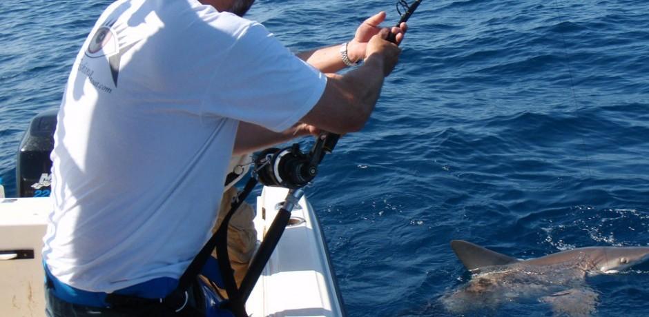 Lawrence-playing-300lb-Bull-Shark